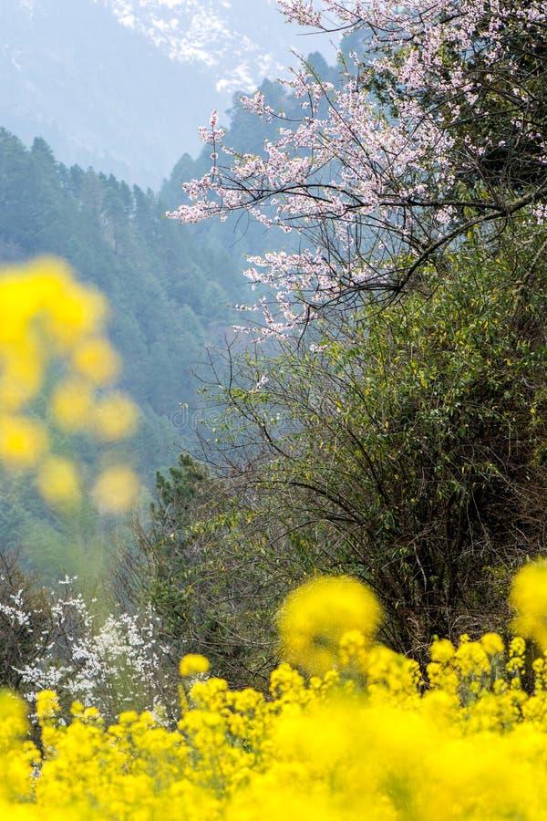 As flores do cole imagens de stock