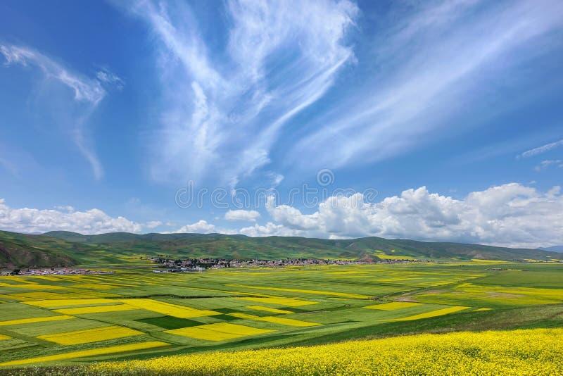 As flores do cole e o céu nebuloso fotografia de stock royalty free