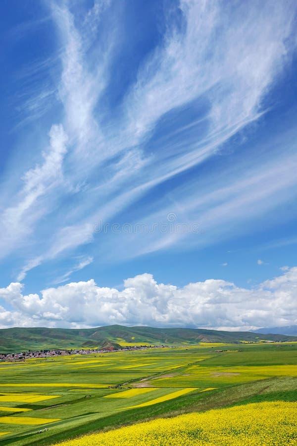 As flores do cole e o céu nebuloso imagem de stock royalty free