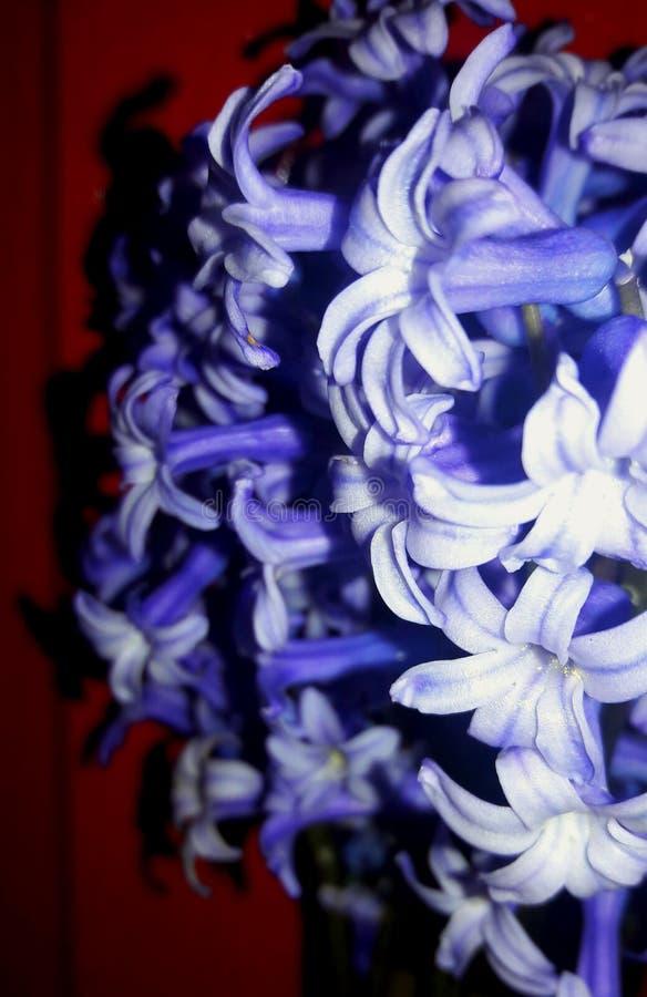 As flores do roxo da beleza fotografia de stock