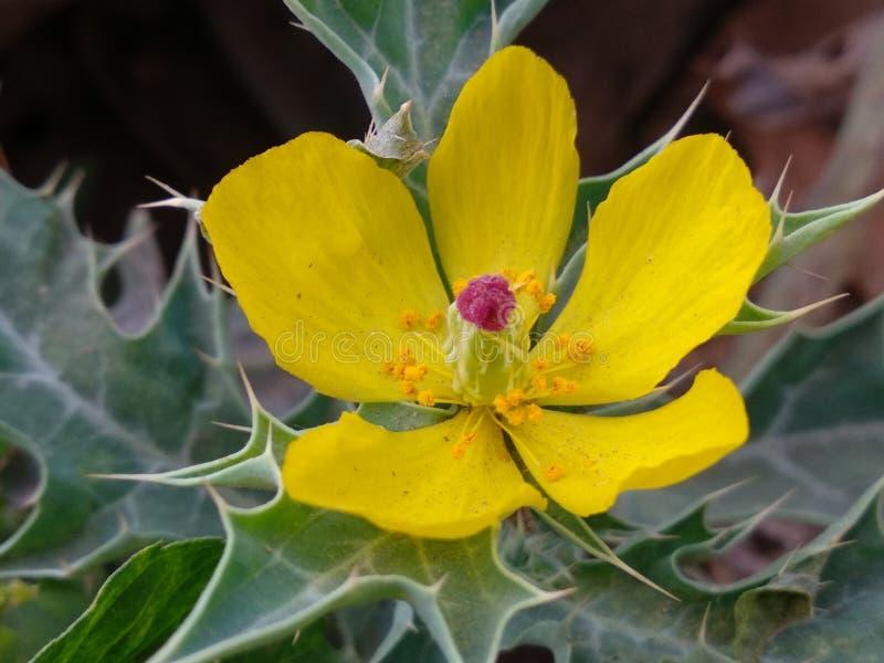 As flores do selo, alguma hora são boas este tipo de flores foto de stock royalty free