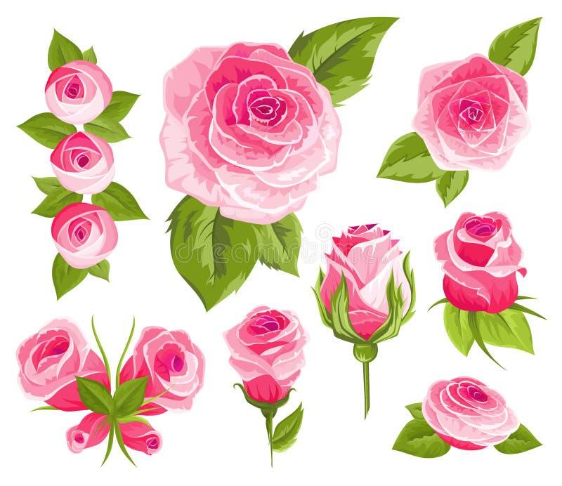 As flores do vintage ajustaram-se Rosas e botões cor-de-rosa O casamento floresce o pacote A coleção da flor da aquarela detalhou ilustração stock