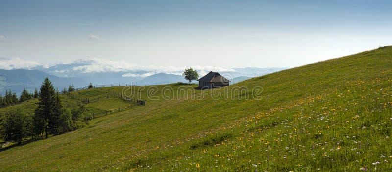 As flores e as ervas do prado florescem nos Carpathians contra o contexto das florestas e das montanhas no verão imagem de stock royalty free