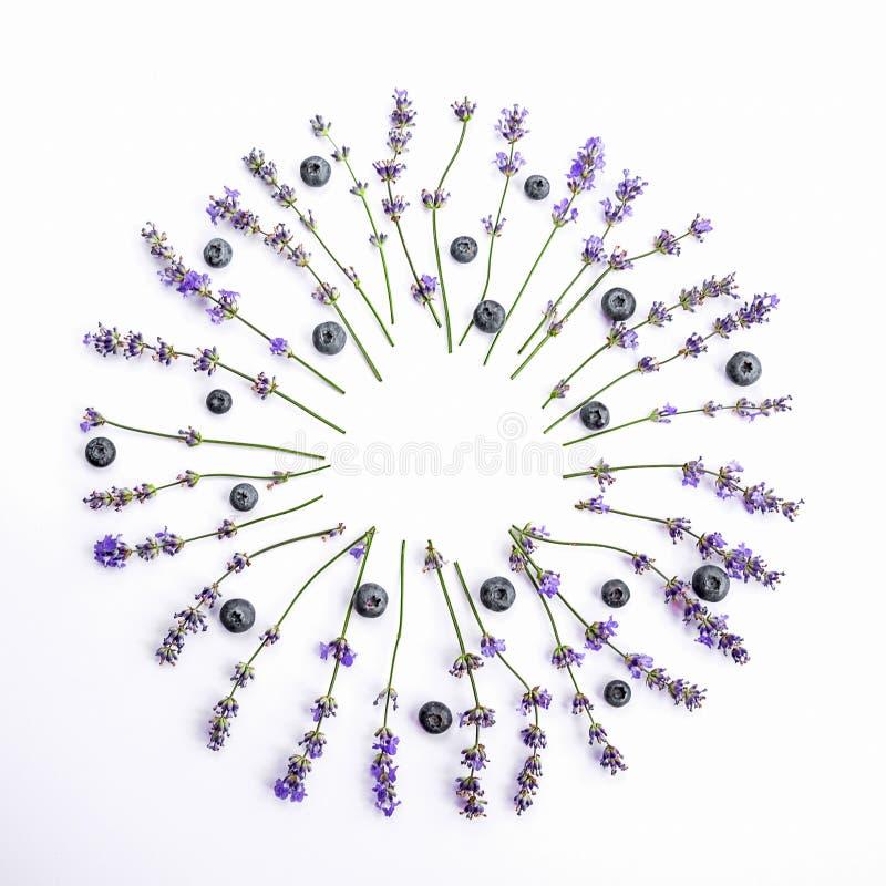 As flores e os mirtilos frescos da alfazema arranjaram no círculo em um fundo branco As flores e os mirtilos da alfazema zombam a imagens de stock