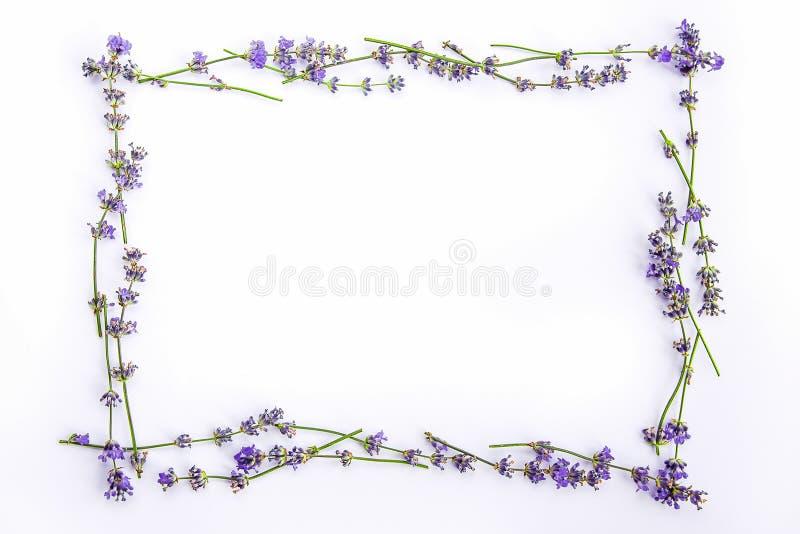As flores e os mirtilos frescos da alfazema arranjaram no círculo em um fundo branco As flores e os mirtilos da alfazema zombam a imagens de stock royalty free