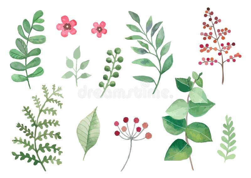 As flores e as plantas ajustaram as folhas e os ramos dos vetores do watercolour imagens de stock royalty free
