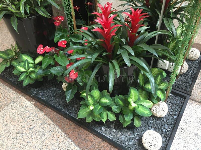 As flores e as plantas arranjaram no canto da loja do apartamento fotos de stock royalty free