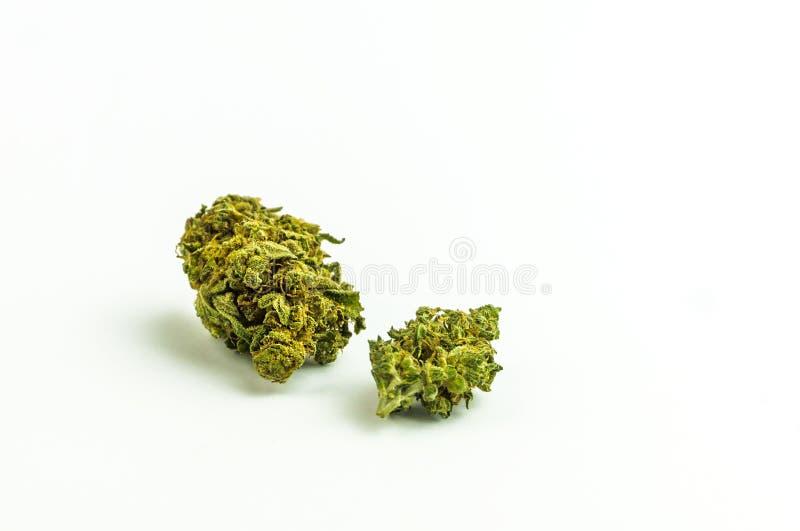 As flores em botão do cannabis fecham-se isolado acima imagem de stock royalty free