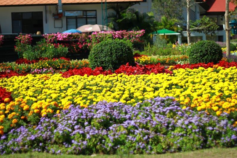 As flores exteriores do jardim com muitas variedades de flor estão florescendo tão bonito imagem de stock royalty free