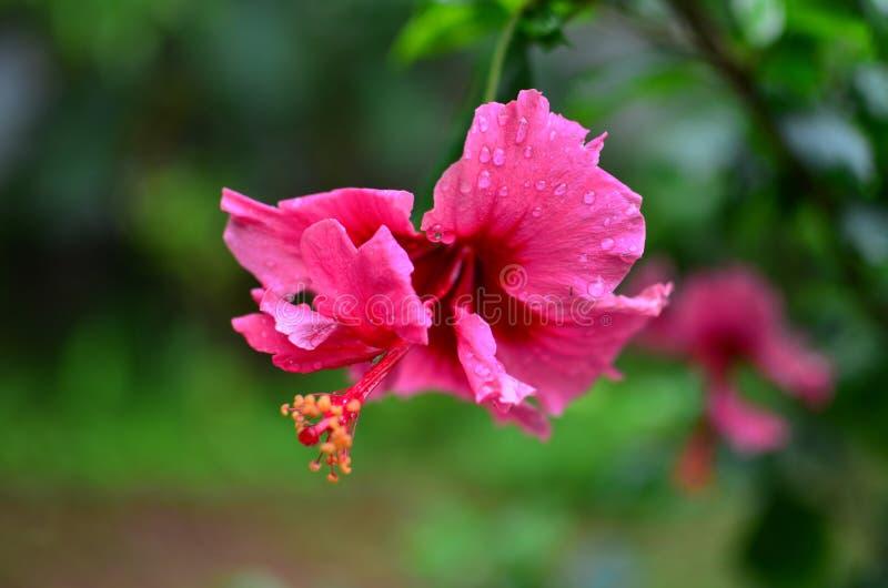 As flores, flores, flor, deflowers, cártamos, seguidores, cártamo, girassóis, mayflowers, seguidor, sunf foto de stock