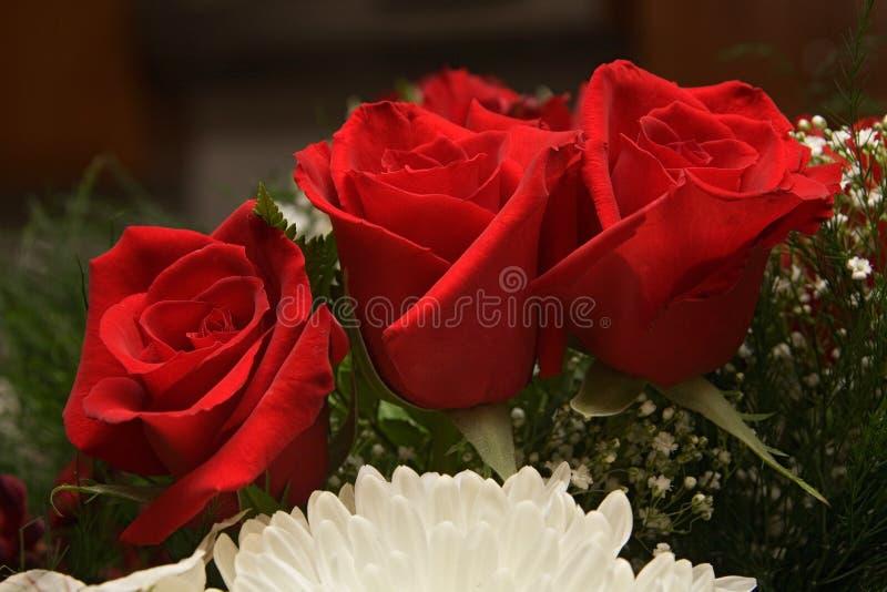 As flores levantaram-se imagens de stock royalty free