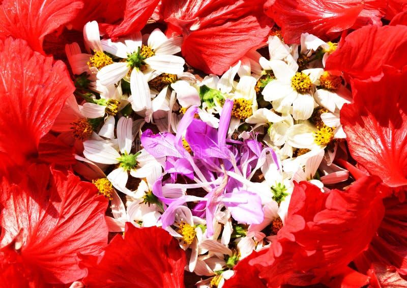 As flores no coração dão forma no fundo da grama verde imagens de stock royalty free