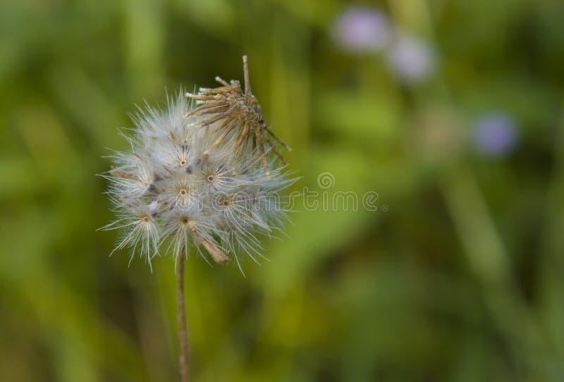 As flores pequenas têm um bonito imagem de stock royalty free