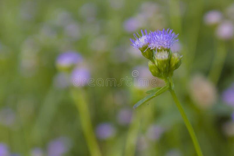 As flores pequenas têm um bonito imagens de stock