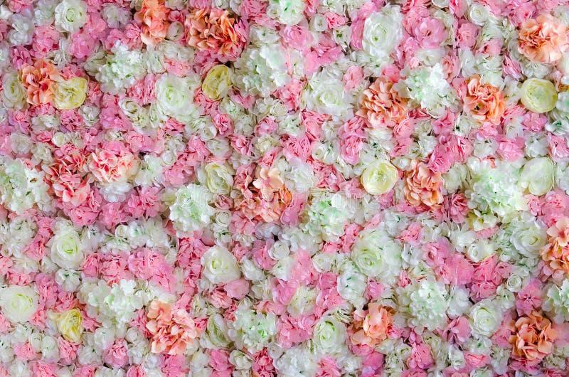 As flores saltam cores desvanecidas atuam como o fundo para sessões fotográficas imagem de stock royalty free