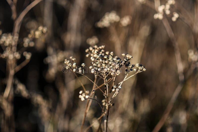 As flores secadas selvagens no prado no outono temperam no Polônia foto de stock