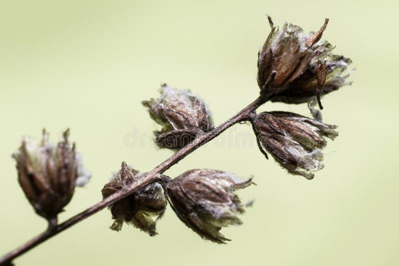As flores secas do ano passado imagens de stock royalty free