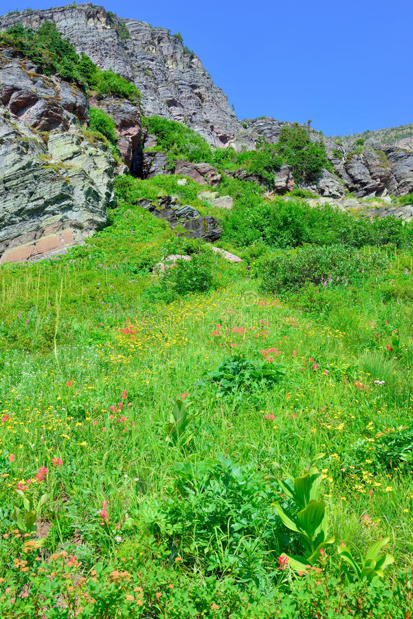 As flores selvagens e a paisagem alpina alta da geleira de Grinnell arrastam no parque nacional de geleira, montana imagem de stock