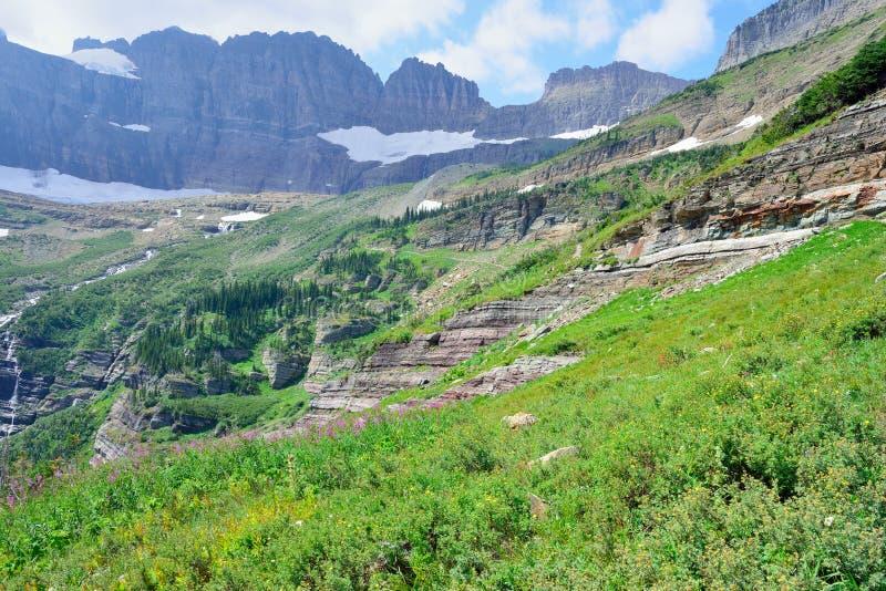 As flores selvagens e a paisagem alpina alta da geleira de Grinnell arrastam no parque nacional de geleira, montana fotos de stock