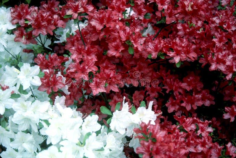 As flores significam que a mola está aqui fotografia de stock royalty free