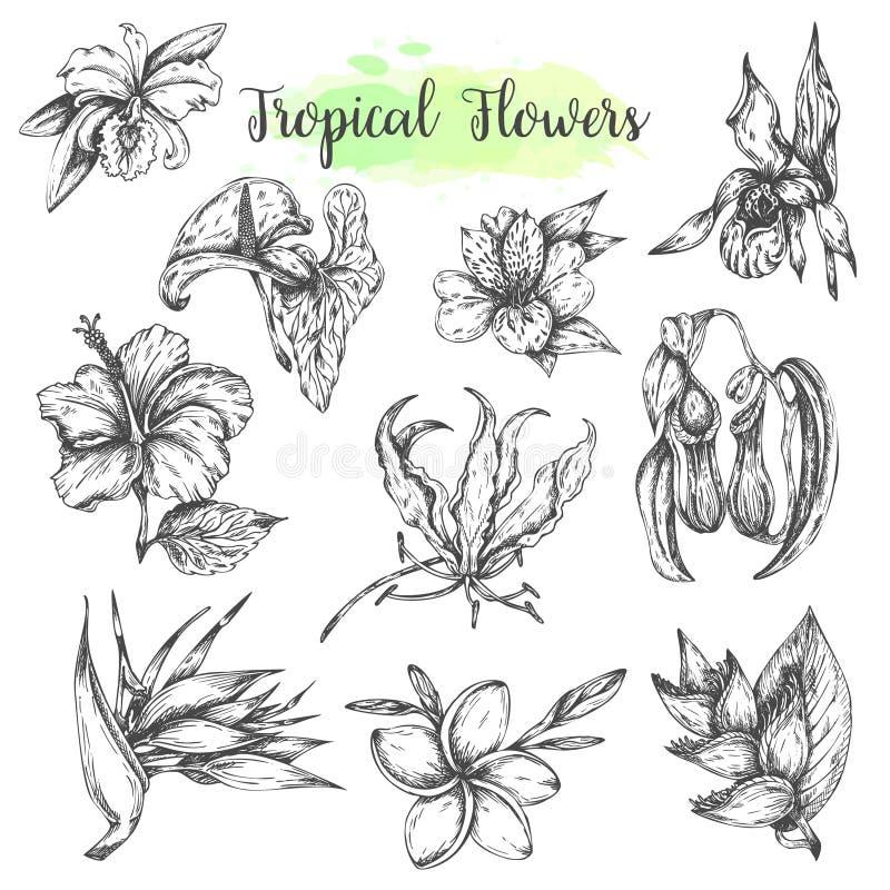 As flores tropicais entregam o pássaro tirado da flor de paraíso, hibiscus, frangipani Grupo floral do trópico Ilustração do veto ilustração do vetor
