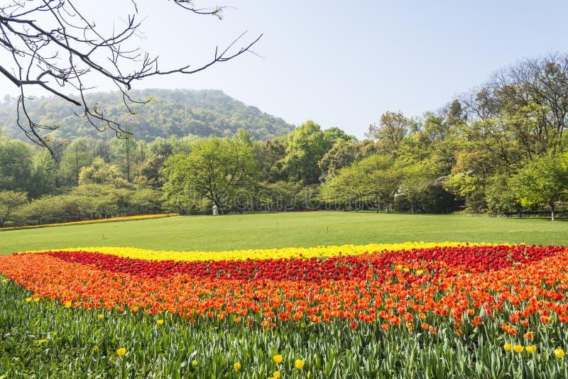 As flores verdes do gramado e das tulipas imagem de stock royalty free
