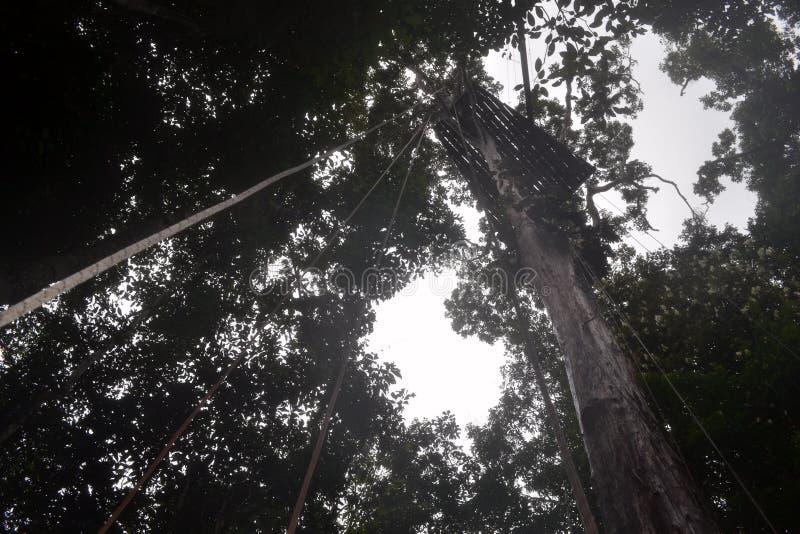 As florestas fotos de stock