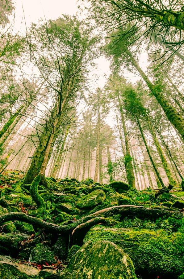As florestas da Transilvânia imagem de stock
