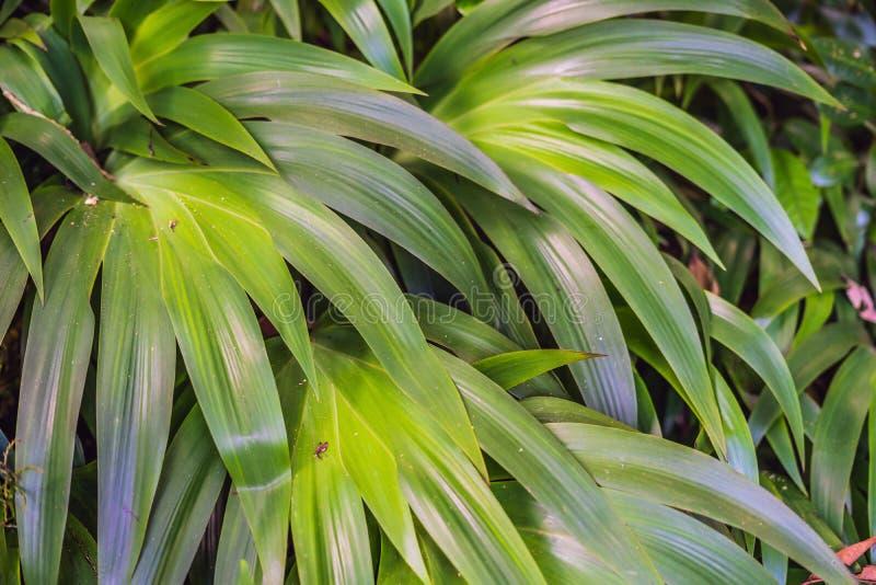 As florestas molhadas exóticas das plantas tropicais estão molhadas após a chuva foto de stock