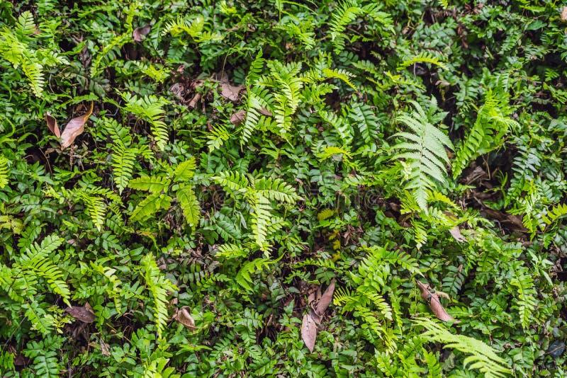 As florestas molhadas exóticas das plantas tropicais estão molhadas após a chuva imagem de stock