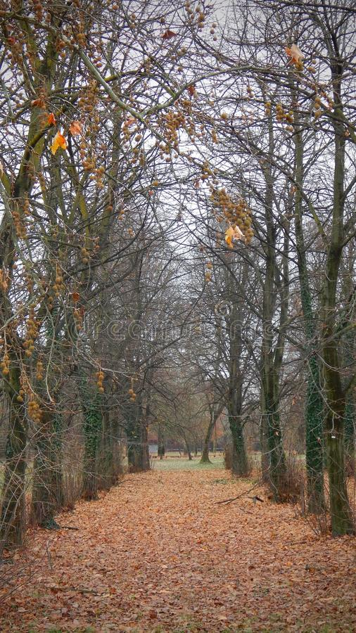 As folhas atapetam na floresta fotos de stock