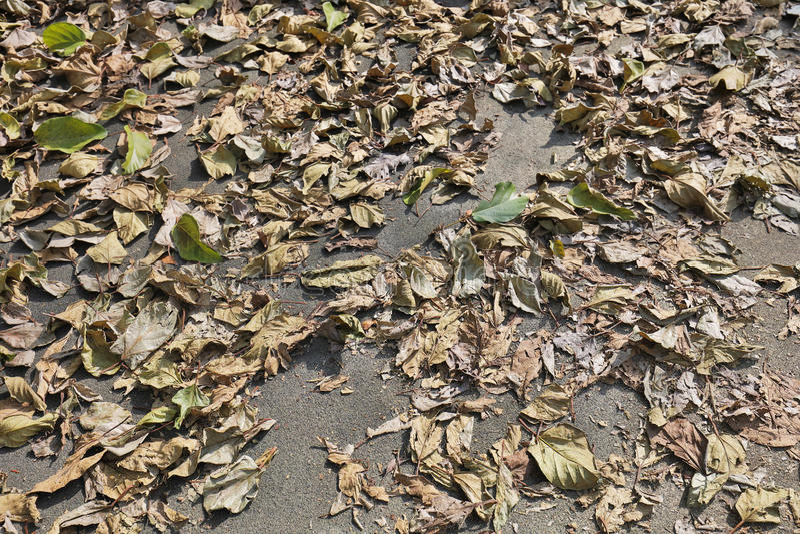 as folhas caídas cobrem a terra outono imagem de stock royalty free