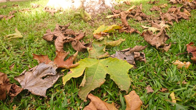 As folhas caem na esta??o do outono fotos de stock
