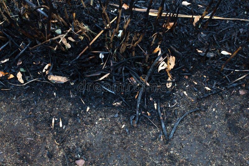 As folhas da cinza após o fogo fotos de stock royalty free