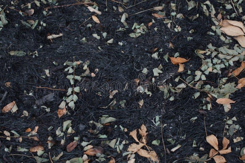 As folhas da cinza após o fogo fotos de stock