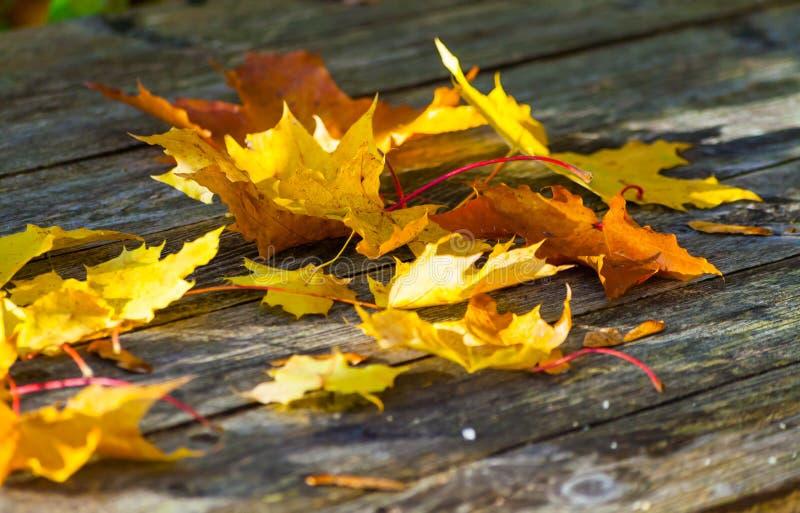 As folhas de bordo amarelas do outono encontram-se em uma tabela de madeira fotos de stock royalty free
