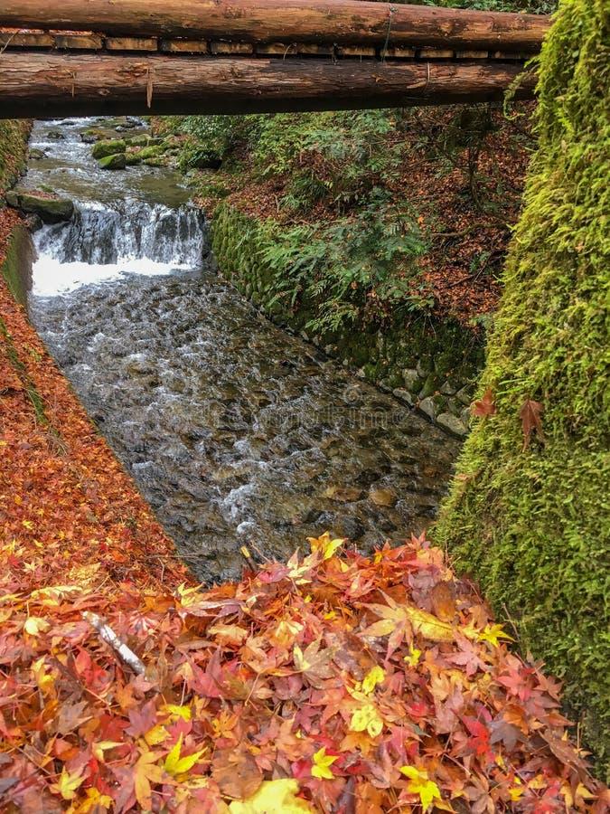 As folhas de bordo coloridas do outono deixam cair na terra ao lado do córrego pequeno fresco para o fundo com espaço da cópia foto de stock