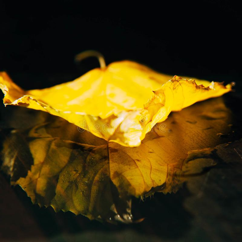 As folhas de outono amarelas, verdes das árvores moldam a composição na imagem de stock