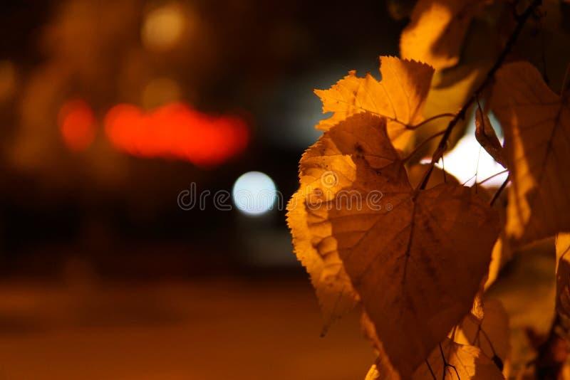 As folhas de outono coloridas fecham-se acima com iluminação da noite foto de stock