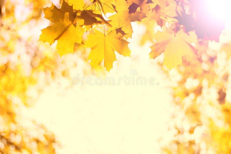 As folhas de outono decoram a natureza bonita do bokeh contra o contexto da terra da floresta, luz solar, foco seletivo foto de stock royalty free
