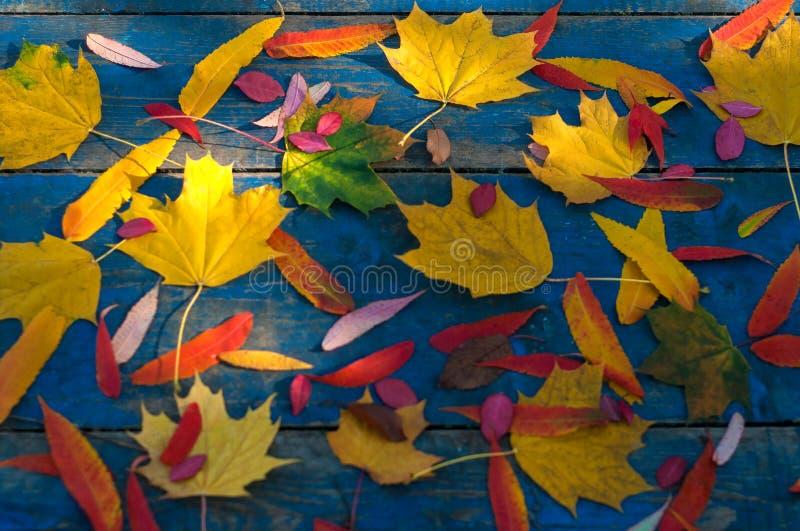 As folhas de outono olorful do ¡ de Ð no azul arrastaram placas fotos de stock royalty free