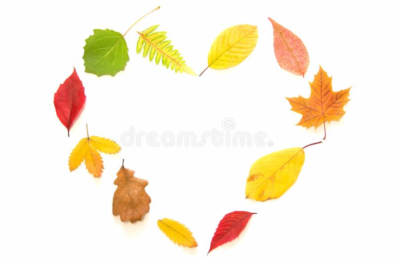 As folhas de outono que fazem o coração dão forma no fundo branco fotografia de stock royalty free