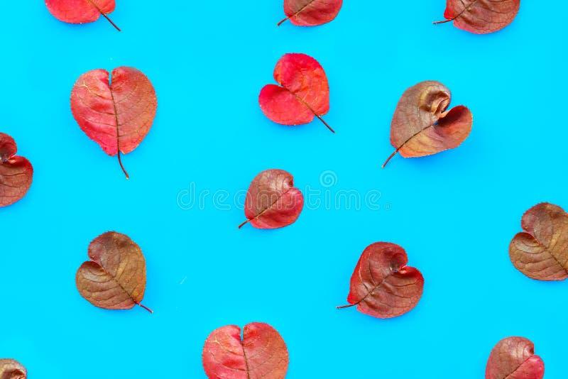 As folhas de outono roxas coração-deram forma ao teste padrão no papel de turquesa, fundo abstrato do outono, fotografia de stock