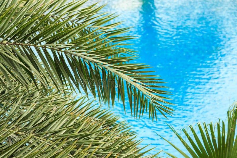 As folhas de palmeira frescas no fundo bonito da agua potável fotografia de stock