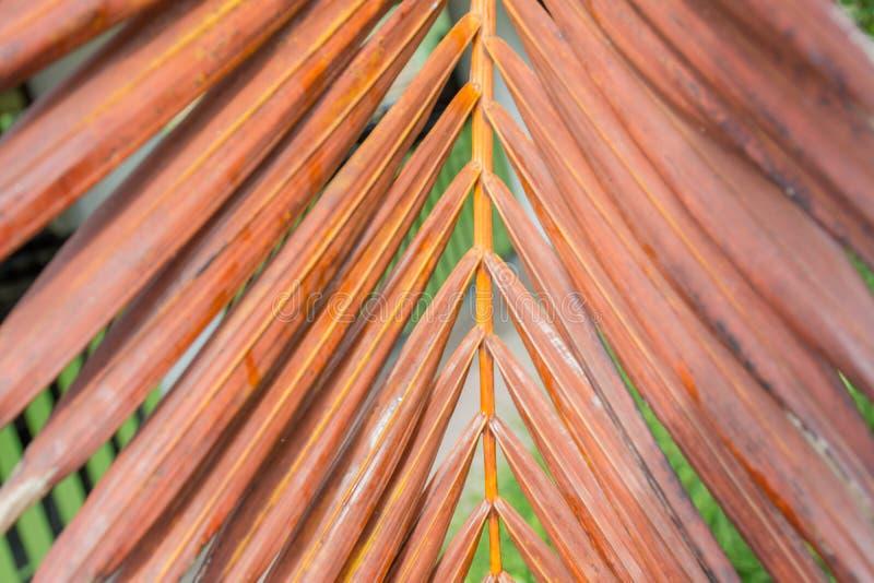 As folhas de palmeira velhas imagem de stock