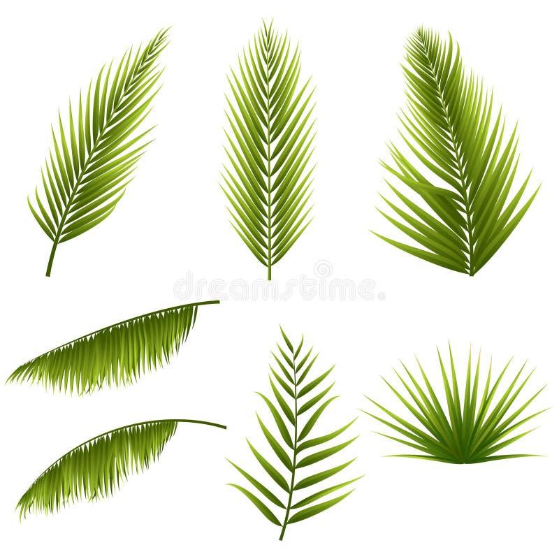 As folhas de palmeira verdes tropicais realísticas ajustaram-se isolado no fundo branco Flora exótica da selva Elementos para seu ilustração do vetor