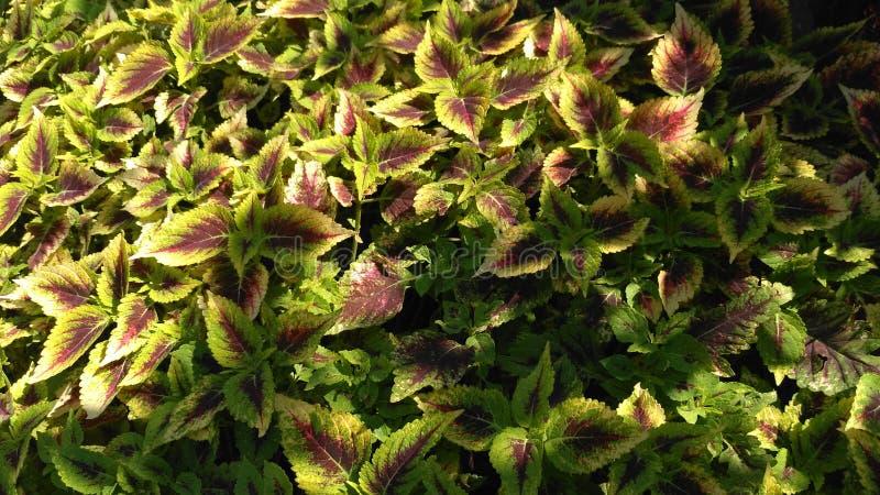 As folhas do colorfull imagens de stock royalty free