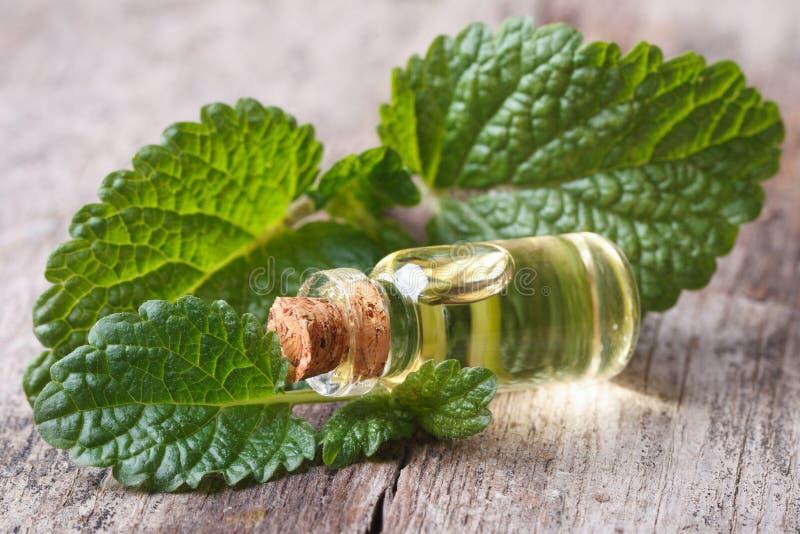 As folhas do erva-cidreira fecham-se acima com uma garrafa do óleo imagem de stock