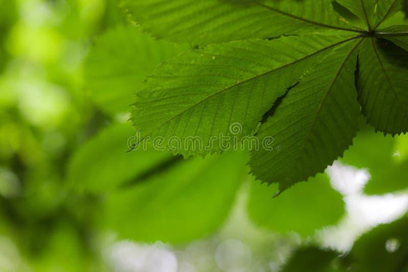 As folhas do verde fecham-se acima imagens de stock