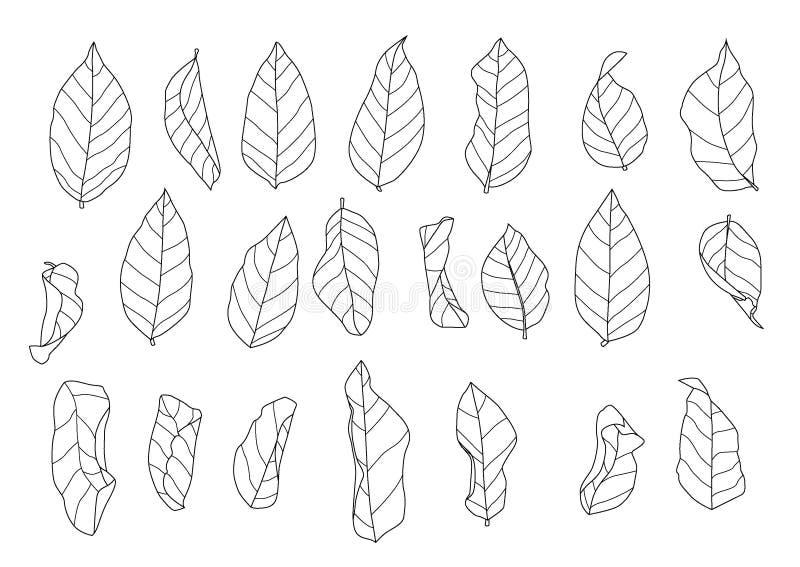 As folhas esqueletais secam a folha alinharam o projeto e a linha preta único preto do teste padrão da folha traz para colorir bo ilustração royalty free